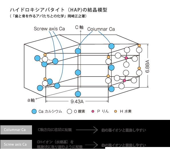 ハイドロキシアパタイト(HAP)の結晶模型